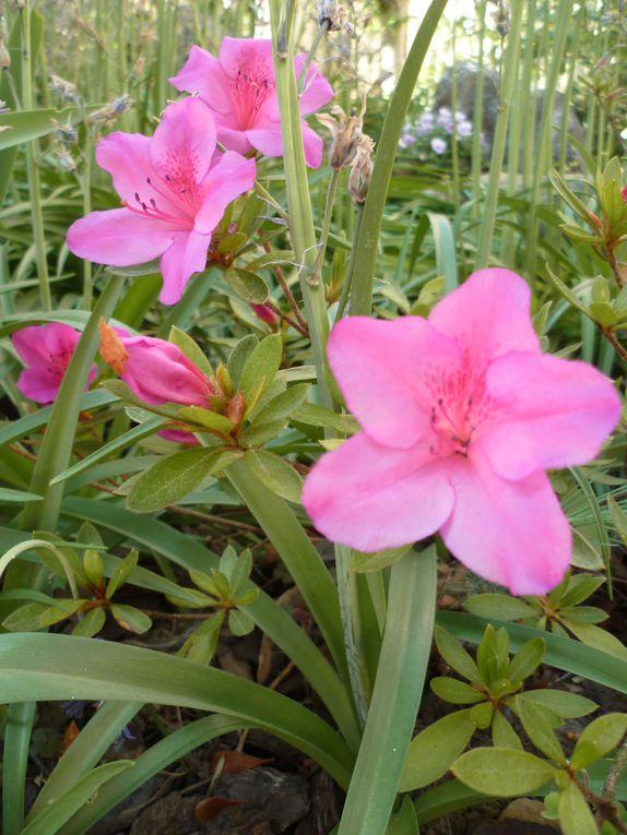 """Selon les saisons, les fleurs bleues, les blanches ou les roses sont à l'honneur, sans oublier mon potager et quelquefois """"le 4 pattes"""" des lieux !"""