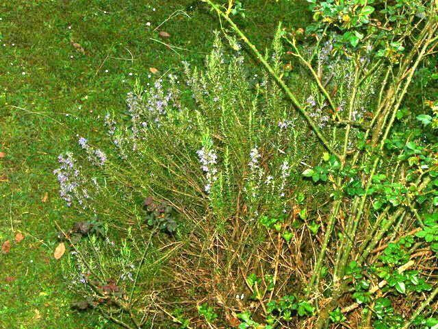 La fin de l' hiver le jardin reprend vie il fleurit a nouveau