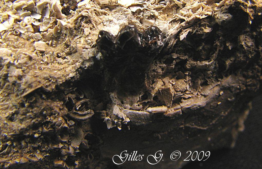 Album - Fossiles-de-Bouxwiller