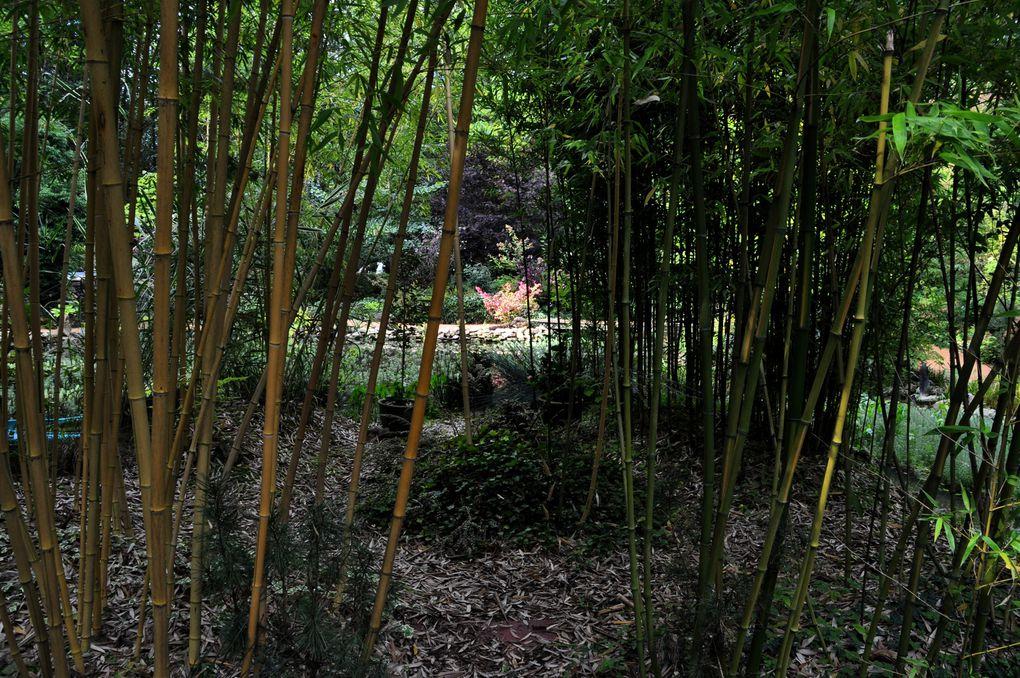 Différents jardins: Le Grand Courtoiseau (45), Le Jardin des Dentelles (45), L'arboretum de Balaine (03)...