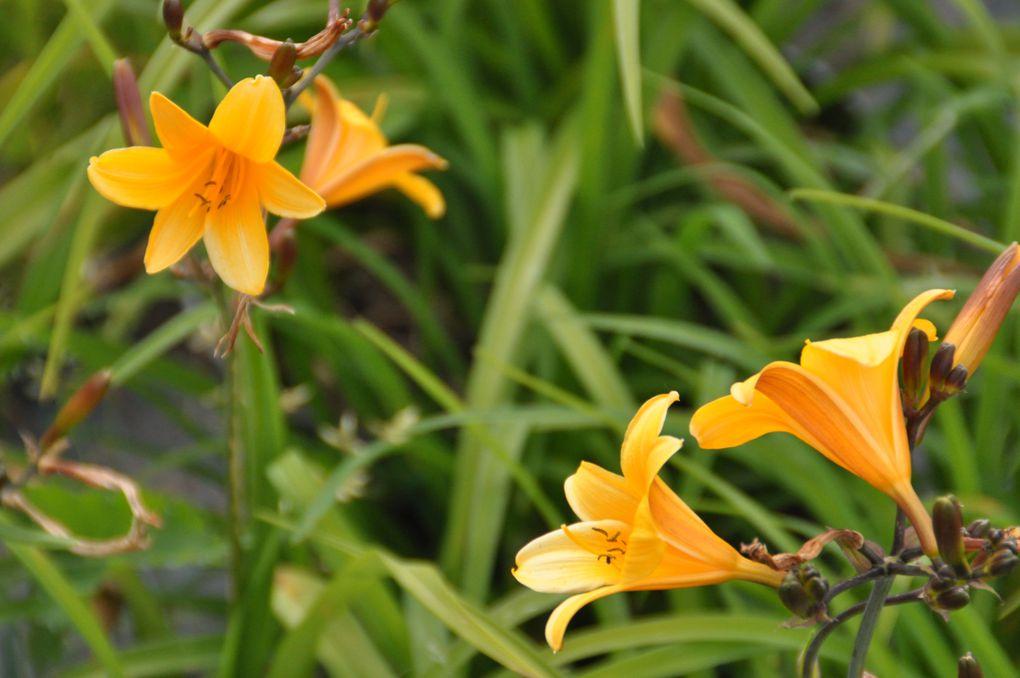 D'autres plantes disponibles à la pépinière