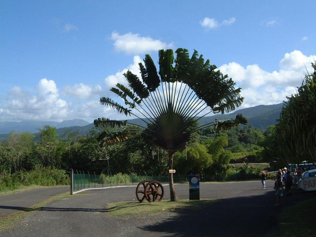 Fleurs et plantes rencontrées aux Antilles...