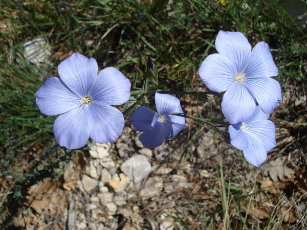 Quelques unes des fleurs, arbusteset plantes, le plus souvent aperçues dans notre région, au cours de nos randos, We et séjours.