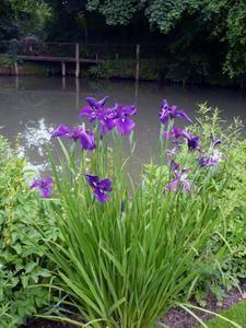 <p>plantes, jardins, d&eacute&#x3B;cors de jardins, animeaux, nature</p>