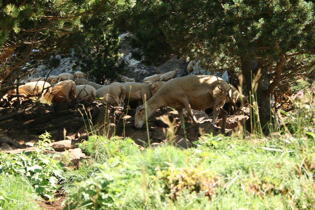 Vacances à Ceret août 2010