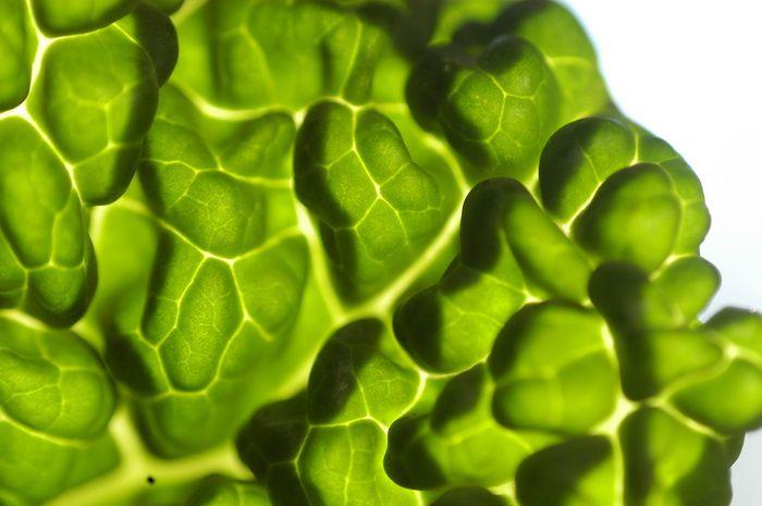 Album - vegetaux 2008