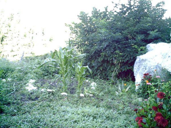 Album - potager et fleurs