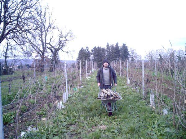 Travaux de la vigne:les photos sont en vrac,vous trouverez toutes les explications détailléessur la saison de greffe 2007 dans nos articles.Visionnez les vidéos et partagez notre passion jour après jour.<strong>Inscrivez-vous à la news-lette
