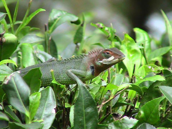 <p>Toute la diversit&eacute&#x3B; du Sri Lanka en quelques photos ... sublime !</p>