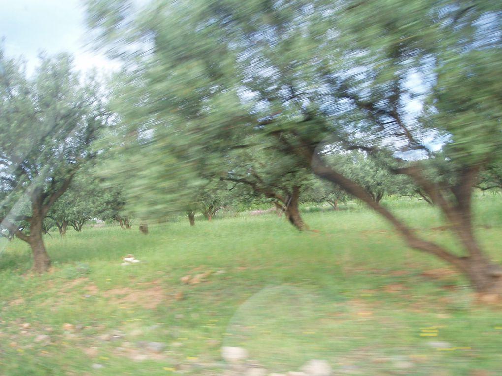 Album - Quelques-photos-du-Maroc-oriental- mai 2010