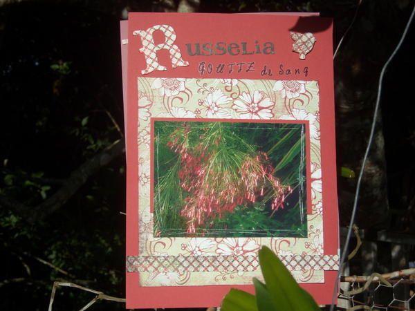 Album - album-fleurs-des-antilles