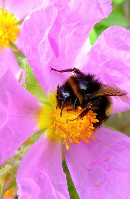 Album - Les-abeilles