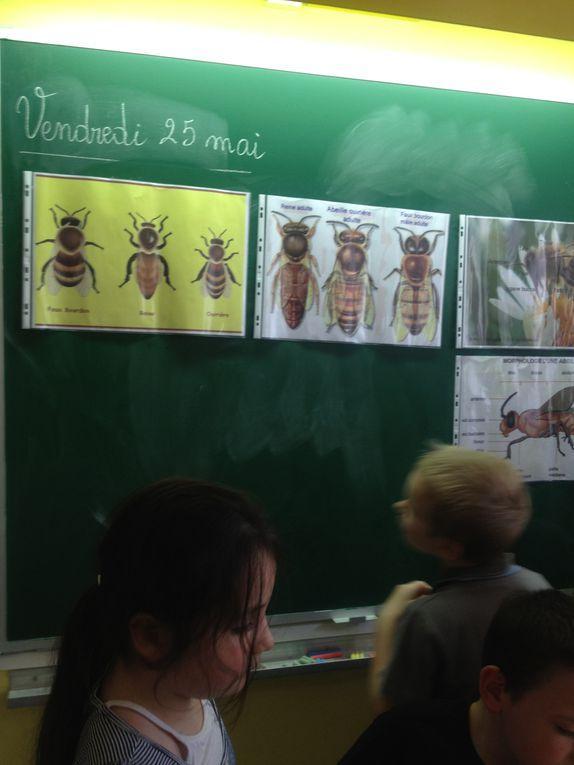 Z - Un-apiculteur-en-CE1-2012