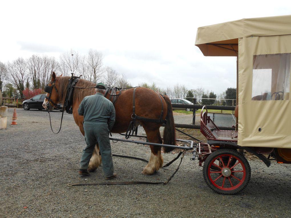Z - Les G.S découvrent les chevaux de trait 2012
