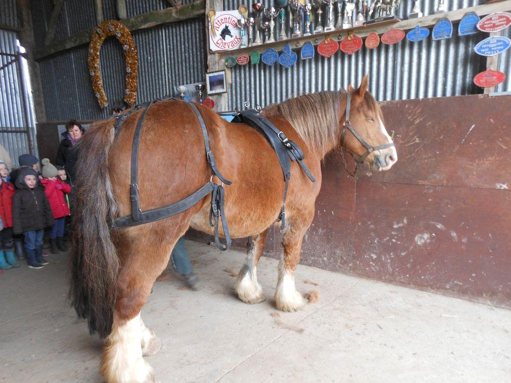 Z - Les G.S découvrent les chevaux de trait2013
