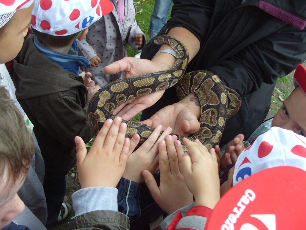 Z - Zoo-de-Jurques 2011