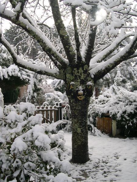 <p>Je vous invite &agrave&#x3B; d&eacute&#x3B;couvrir des arbres &eacute&#x3B;tonnants ! Certains peuplent mon jardin, d'autres habitent des for&ecirc&#x3B;ts myst&eacute&#x3B;rieuses !</p><p>Si ces arbres vous interpellent allez&nbsp&#x3B; vite lire les textes s'y rapportant ( dans la rubrique : Broc&eacute&#x3B;liande ou jardin )</p><p>&nbsp&#x3B;</p>