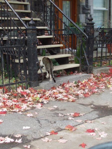 Les rues de Montréal en plein automne, 2007