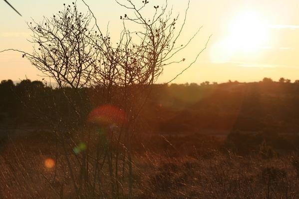 les photos de nature jusqu'en janvier 2009
