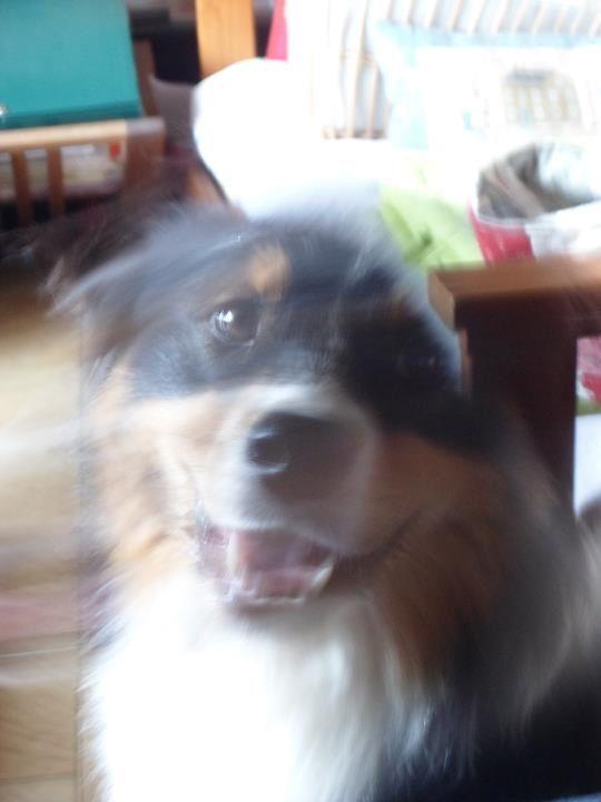 les photos de la petite dernière depuis son arrivée en Octobre 2009
