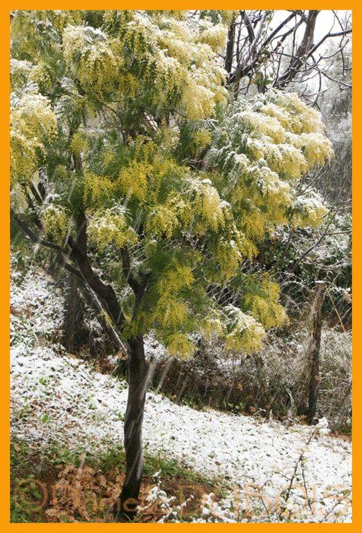 La neige tombe sur toute la Côte d'Azur. Photos de Nice, Saint-Laurent du Var, Gattières et arbres couverts de neige.