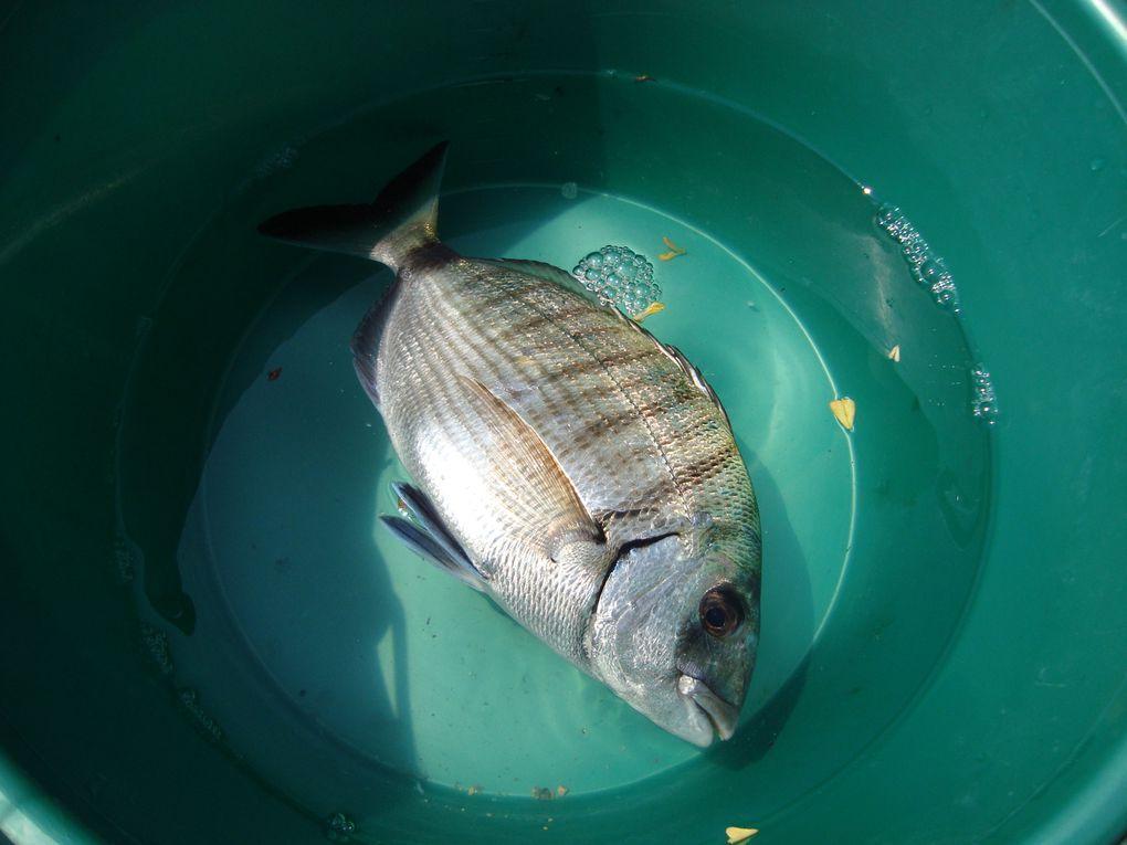 Pêche aux calmars et poissons.