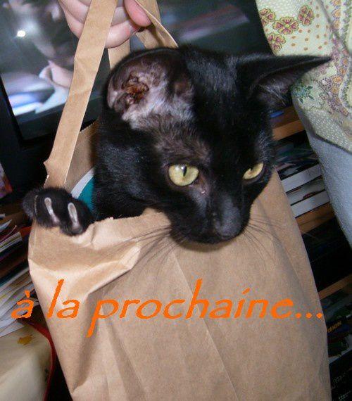 petite chatte noire (juin08)dont la propriétaire est Polochon (il parait !!! lol)et nouvelle venue depuis quelques mois squatteuse de maison : Chaussette
