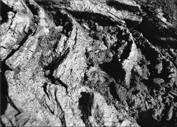 """<h2>- BLACK & WHITE - Photographies de la barrière anti-char dite """"<a target=""""_self"""" href=""""http://zeporg.over-blog.org/categorie-1183716.html"""">Toblerone</a>"""" </h2><p>2005 """"Toblerone"""" exposition et supplément<br />Travail photographique en noir et blanc. <br />Thématique : La ligne de fortification antichar de la Promenthouse communément appelée """"Les Toblerones"""". <br />Action sur le terrain et en laboratoire pour aboutir à une sélection finale de vingt photographies à développer en grand format"""