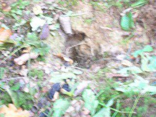 Le lundi 15 septembre 2008, les élèves de la classe de CM1/CM2 se sont rendus dans les bois de Chassigny. Là-bas, ils ont étudié le milieu: les arbres, les plantes, les champignons et les traces d'animaux.
