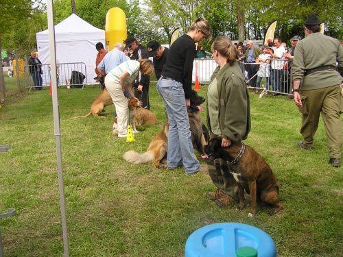 Retrouvez le club canin lors des différentes démonstrations organisées lors des fêtes de village.