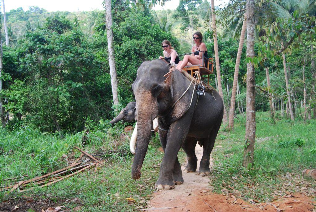 Voyage en Thaïlande, Février 2009