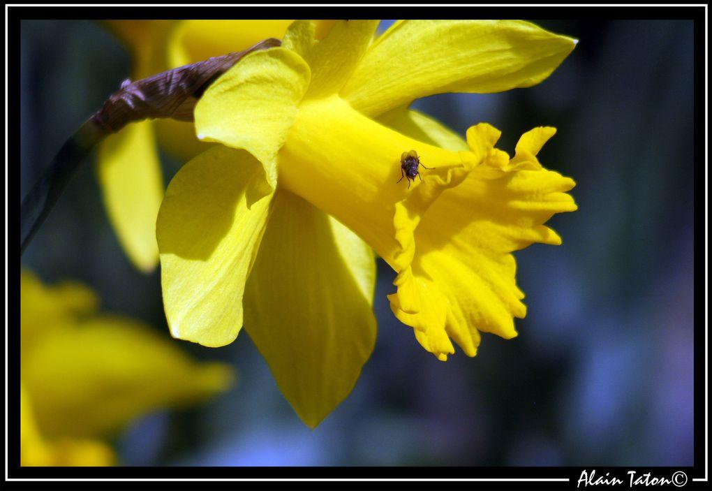 Album - Le-printemps