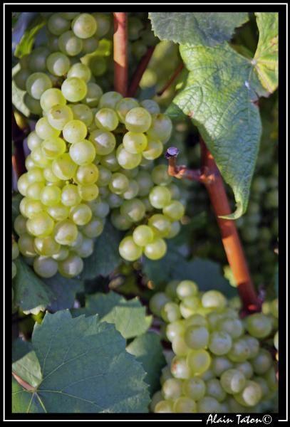 Album - La route des vins