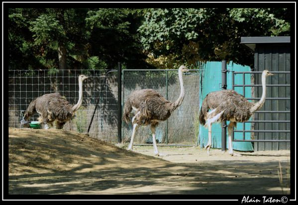 Album - Zoo-de-Vincennes
