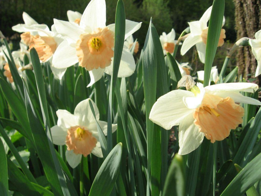 Album - Narcisses-de-Berchigranges