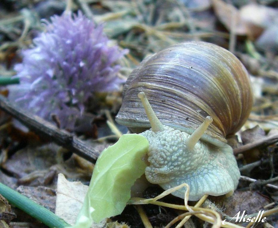 Album - Escargots