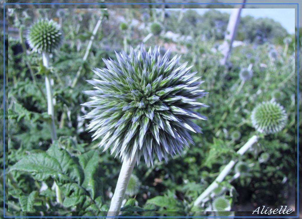 Album - Jardin-2