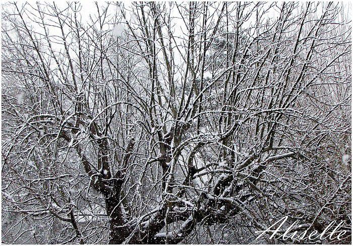 Album - givre--glace- neige