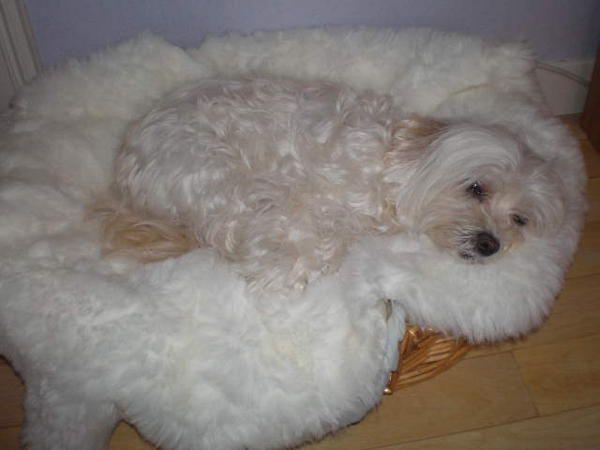 Ma petite chienne que j'adore