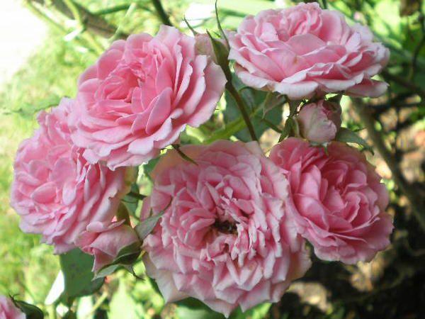 Fleurs et ambiance nature