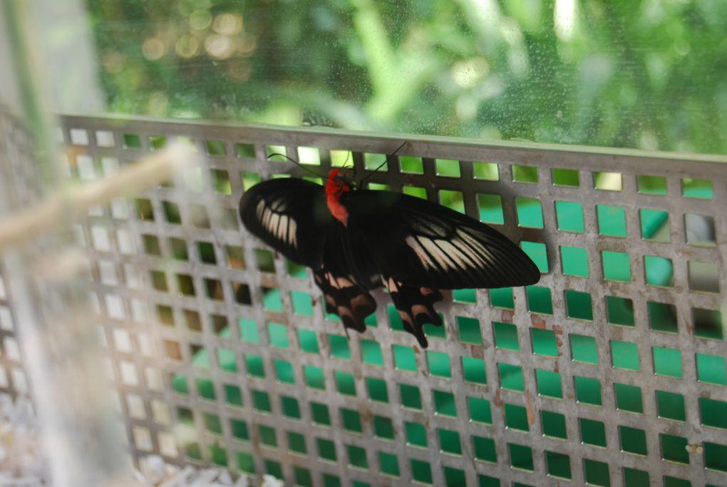 Les papillons de mon jardin