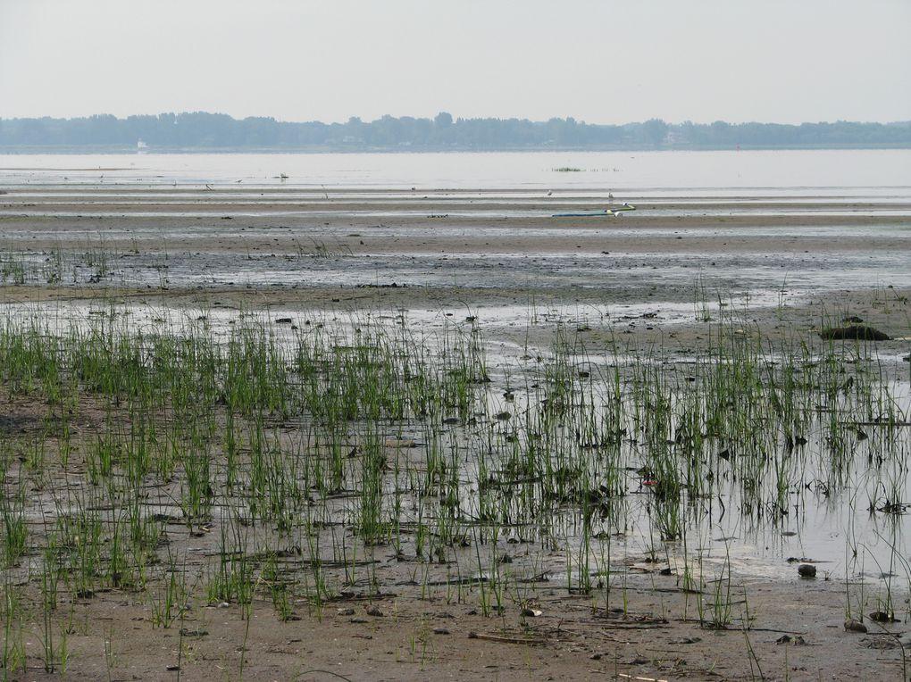 Album - Pointe-du-Lac