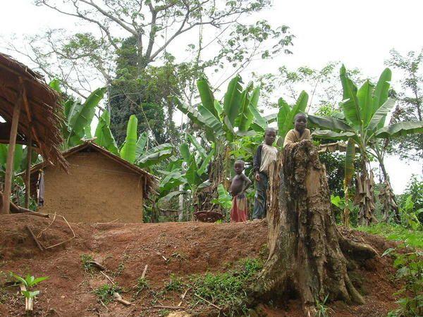 Photos de ce qui reste de la forêt dans les environs de Djoum.
