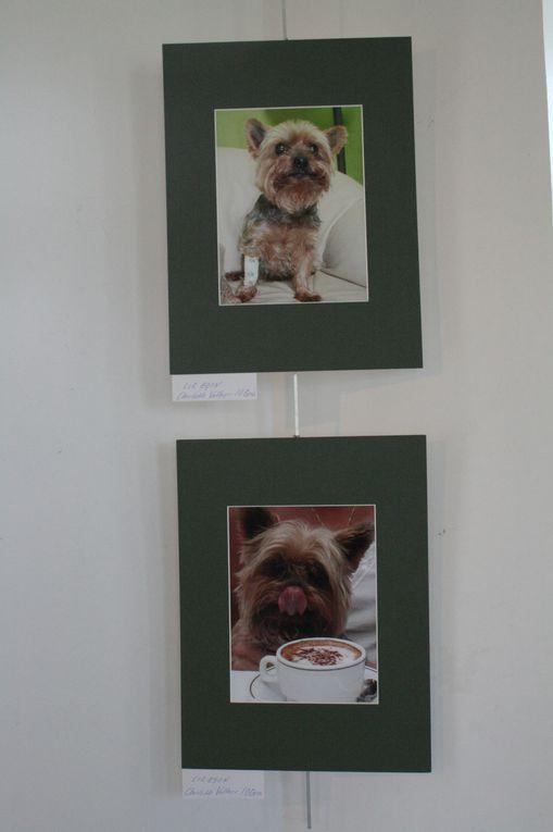 Exposition d'oeuvres organisée par Charlotte Vallner sur le thème des animaux au profit de la SPA.