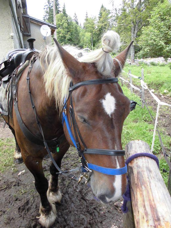 3 jours de randonnée à cheval dans le Jura...