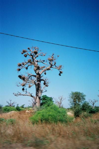 Album - Dakar