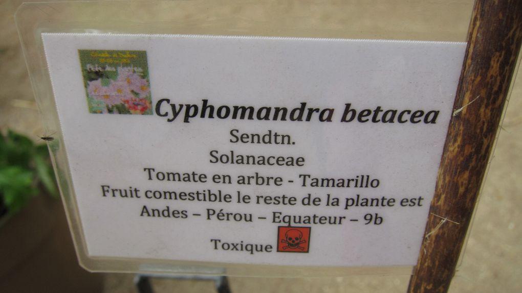 """En la citadelle de Doullens, la fête annuelle, fin mai 2013, des plantes avec pour thème """"les solanacées"""""""
