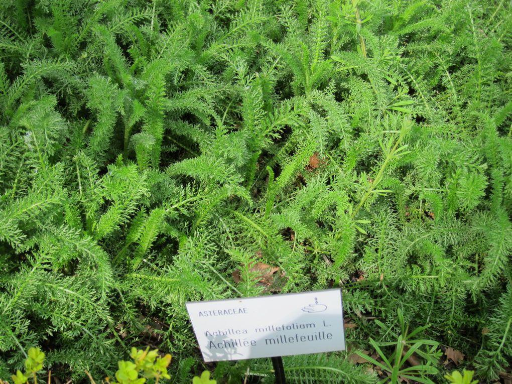 visite guidée ce 1 er mai 2012 du jardin des plantes d'Amiens sous le soleil
