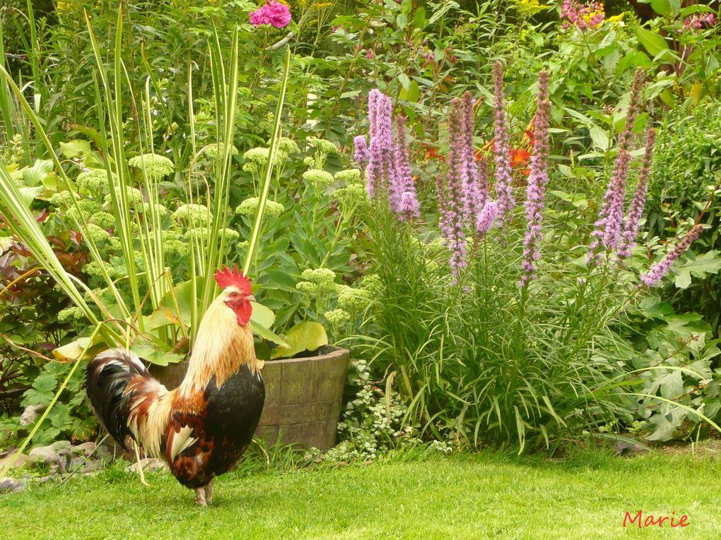 les animaux rencontrés au gré de mes sorties ainsi que ceux du jardin