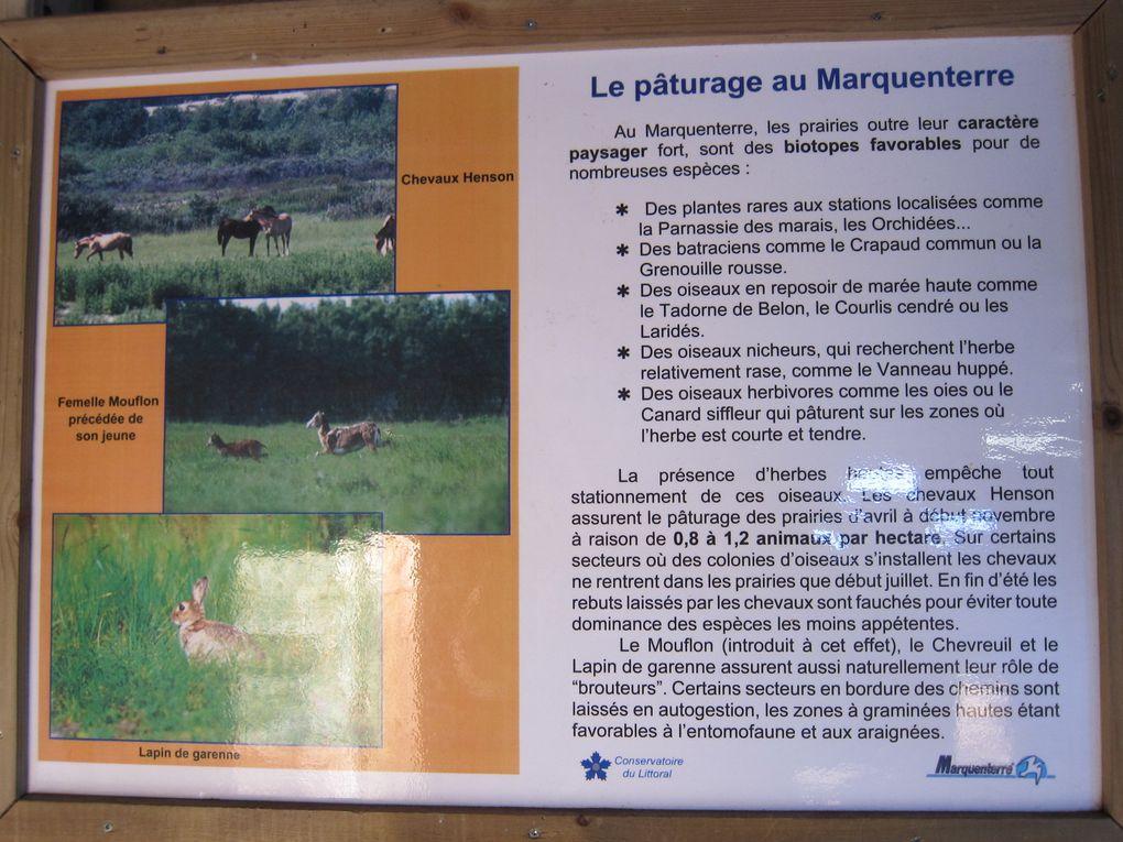 Visite hivernale du parc et de la réserve naturelle